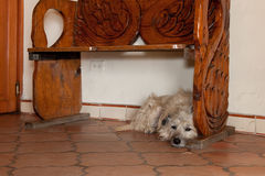 Dog under wooden bench Stock Images