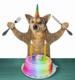 Dog unicorn eats a cake 2 royalty free stock photography