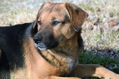 The dog of unknown mixed breed Stock Image