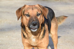 The dog of unknown mixed breed Stock Images