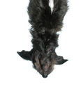 Dog upside down Royalty Free Stock Images