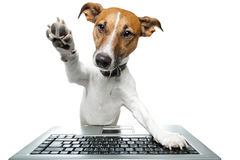 Free Dog Using A Computer Royalty Free Stock Photo - 23266415