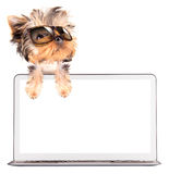Dog using a computer Stock Images