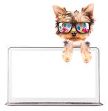 Dog using a computer Stock Photos