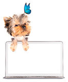 Dog using a computer Stock Photography