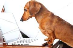 Dog using laptop Stock Photo
