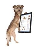 Dog Using Social Media Royalty Free Stock Images