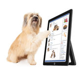 Dog Using Social Media on Tablet Device. A large dog scrolling through a social media website on a tablet device stock photo