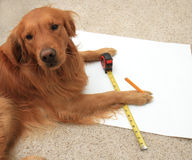Dog using a tape measure Royalty Free Stock Photography