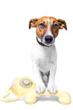 Dog using a yellow phone. Dog with a yellow phone royalty free stock photos