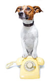 Dog using a yellow phone. Dog with a yellow phone stock image