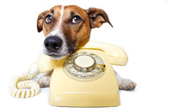 Dog using a yellow phone Royalty Free Stock Image