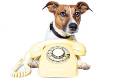 Dog using a yellow phone. Dog with a yellow phone stock photography