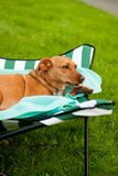 Dog on vacation Royalty Free Stock Images