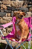 Dog on vacation Royalty Free Stock Photos