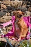 Dog on vacation Royalty Free Stock Photos