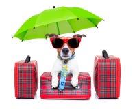 Dog vacation Stock Image