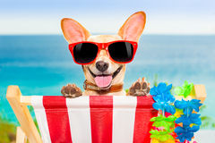 Dog vacation Royalty Free Stock Image