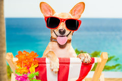 Dog vacation Stock Photos