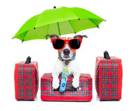 Dog vacation Stock Image