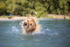 Dog on vacation Royalty Free Stock Image