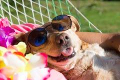 Dog on vacation Royalty Free Stock Photo