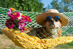 Dog on vacation Royalty Free Stock Photography
