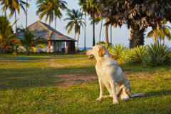 Dog on vacations Stock Image