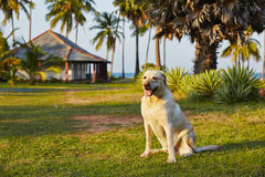 Dog on vacations Royalty Free Stock Photos