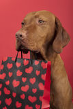 Dog Valentine Royalty Free Stock Photos