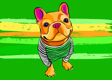 Dog vector breed cute pet animal bulldog french Stock Photography