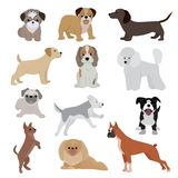 Dog vector cute cartoon puppy illustration home pets doggy different breed and poses bulldog, hand small doggie terrier Stock Photos