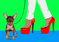 Dog vector small drawing women foot Royalty Free Stock Images