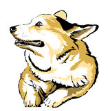 Dog 01 Royalty Free Stock Photography
