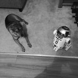 Dog Versus R2-D2. Black and White Royalty Free Stock Photo