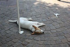 Dog. In a very very hot day Stock Image