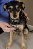 Dog and vet Stock Photos