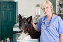 Dog at the Vet Stock Image