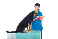 Dog at vet royalty free stock image