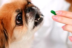 Dog and vet. stock images