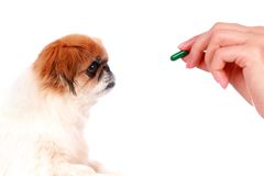 Dog and vet. Royalty Free Stock Images