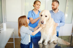 Dog in vet clinic. Dog sitting on table while visiting vet clinic stock photo