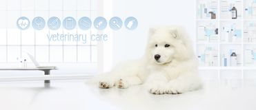Dog in vet clinic with veterinary care icons, veterinarian exami. Nation concept web banner Stock Images