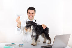 Dog and vet with drugs Stock Photos