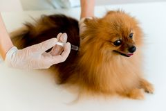 Dog with a vet. Little dog on appointment with a vet royalty free stock photography