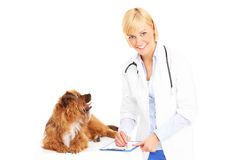 Dog and vet Royalty Free Stock Images