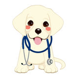 Dog Vet Stethoscope Stock Photos