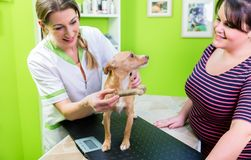 Dog at veterinarian check up gets a bone Royalty Free Stock Photography