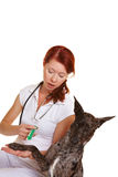 Dog at veterinarian getting Stock Images