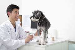 Dog in veterinarian's office getting examined Stock Photography